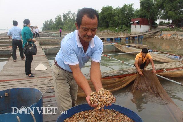 Chơi sang cho cá chép ăn đậu Úc, nông dân Thái Bình thu tiền tỷ - 4