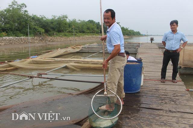 Chơi sang cho cá chép ăn đậu Úc, nông dân Thái Bình thu tiền tỷ - 1
