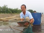 Thị trường - Tiêu dùng - Chơi sang cho cá chép ăn đậu Úc, nông dân Thái Bình thu tiền tỷ