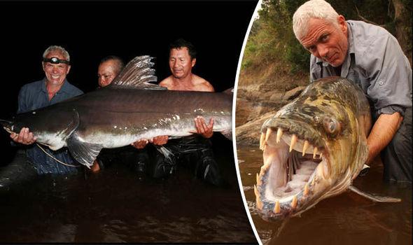 Bắt được cá chình khổng lồ như quái vật thời tiền sử - 1