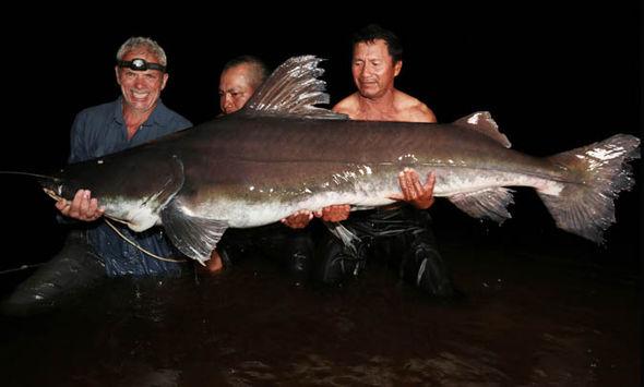 Bắt được cá chình khổng lồ như quái vật thời tiền sử - 2
