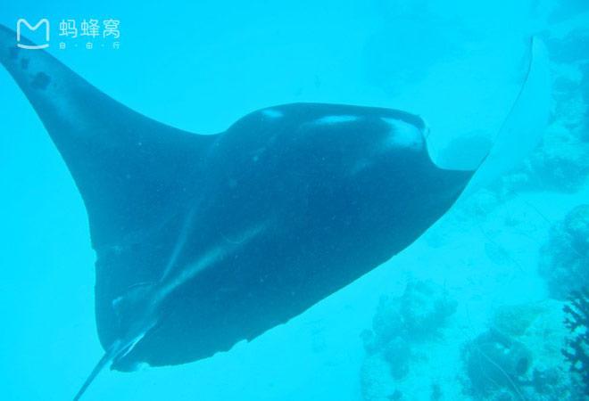 Xách ba lô lên và đi tìm hòn đảo huyền thoại mang tên Palau - 10