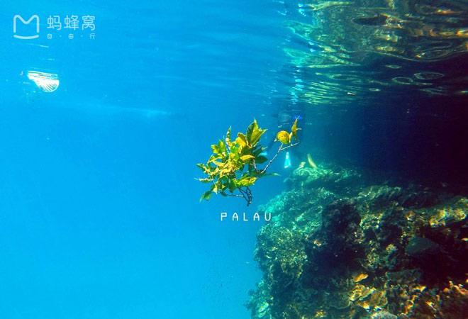 Xách ba lô lên và đi tìm hòn đảo huyền thoại mang tên Palau - 9