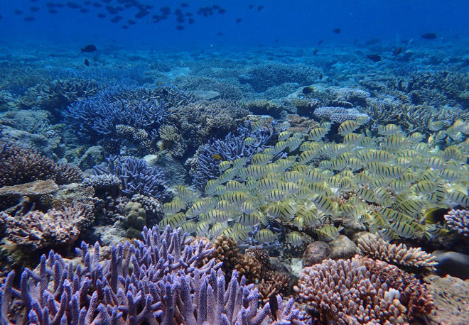Xách ba lô lên và đi tìm hòn đảo huyền thoại mang tên Palau - 16