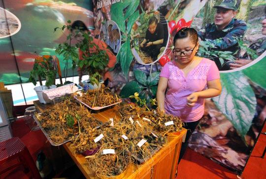 Bán được củ sâm giá 120 triệu đồng tại lễ hội sâm Ngọc Linh - 6