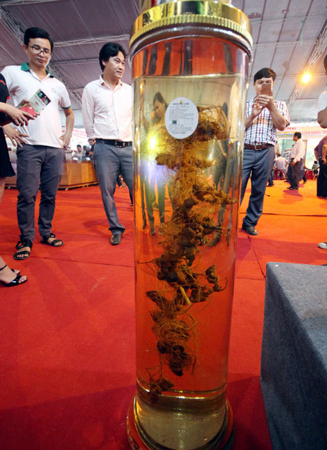 Bán được củ sâm giá 120 triệu đồng tại lễ hội sâm Ngọc Linh - 8