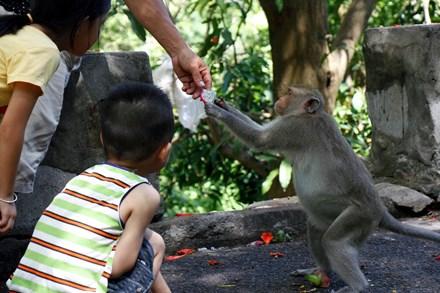 Chuyện kỳ lạ về đàn khỉ nương náu ngôi chùa ở Vũng Tàu - 9