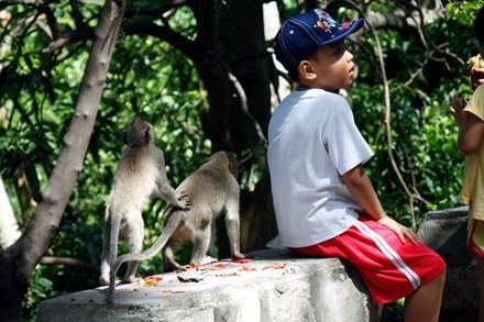 Chuyện kỳ lạ về đàn khỉ nương náu ngôi chùa ở Vũng Tàu - 10