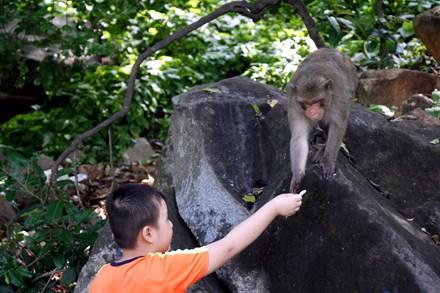 Chuyện kỳ lạ về đàn khỉ nương náu ngôi chùa ở Vũng Tàu - 11