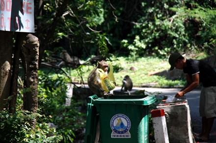 Chuyện kỳ lạ về đàn khỉ nương náu ngôi chùa ở Vũng Tàu - 3