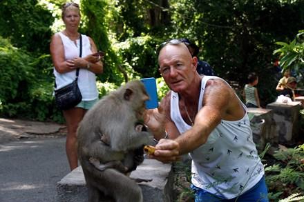 Chuyện kỳ lạ về đàn khỉ nương náu ngôi chùa ở Vũng Tàu - 8
