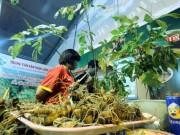 Tài chính - Bất động sản - Bán được củ sâm giá 120 triệu đồng tại lễ hội sâm Ngọc Linh