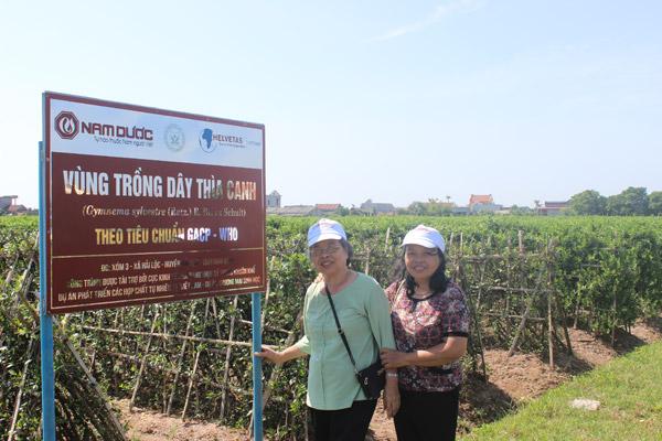 Giải mã viên uống hỗ trợ điều trị tiểu đường số 1 Việt Nam - 4