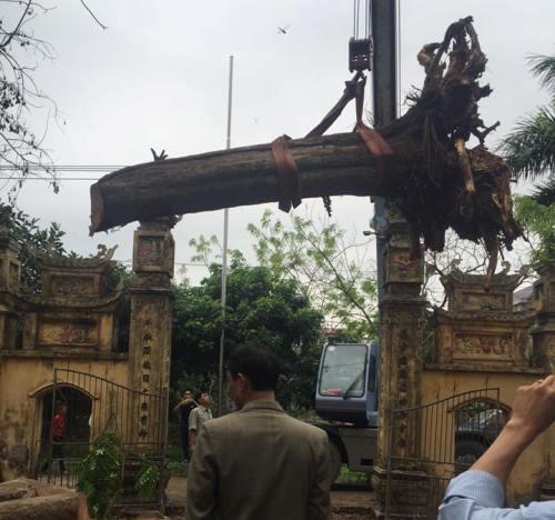 """""""Báu vật"""" 26 tỷ nằm chỏng trơ trong xó nhà đại gia Bắc Ninh - 1"""