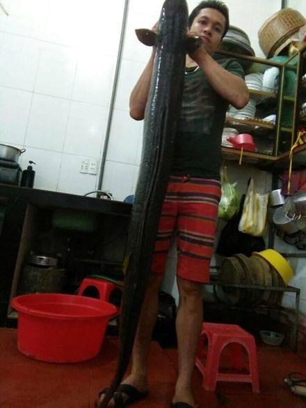 Ngư dân Nghệ An câu được cá Lệch khủng, dài 1,7m - 2