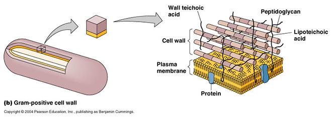Nguyên liệu tăng miễn dịch thế hệ mới Immunecanmix® - 1