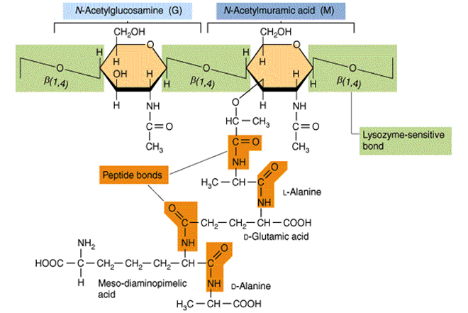 Nguyên liệu tăng miễn dịch thế hệ mới Immunecanmix® - 4