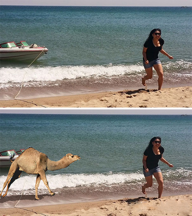 Hóa ra là bị lạc đà dưới biển lên đuổi cho bỏ chạy.