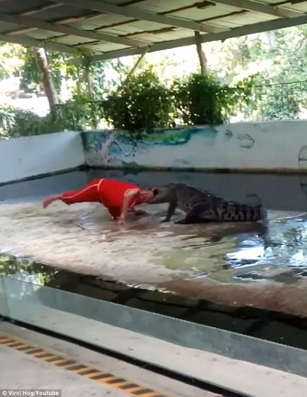 """Thái Lan: Huấn luyện viên bị cá sấu """"nhai đầu"""" khi diễn - 2"""