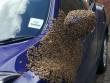 2 vạn con ong bu kín cửa xe ô tô, lái xe không thể chui vào