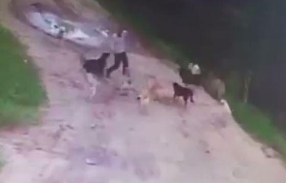 Đàn chó hoang ăn sống người đàn ông say rượu ở Nga - 1