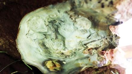 'Sung công' tảng đá bán quý khổng lồ ở Lâm Đồng - 2