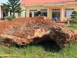 'Sung công' tảng đá bán quý khổng lồ ở Lâm Đồng