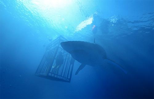 """Hai người đẹp """"chiến đấu"""" với đàn cá mập khiến khán giả rụng tim - 2"""