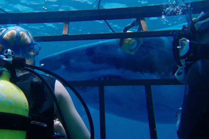 """Hai người đẹp """"chiến đấu"""" với đàn cá mập khiến khán giả rụng tim - 5"""