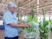 Tài chính - Bất động sản - Tín dụng cho nông nghiệp: Thách đố!