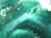 """Hai người đẹp """"chiến đấu"""" với đàn cá mập khiến khán giả rụng tim"""
