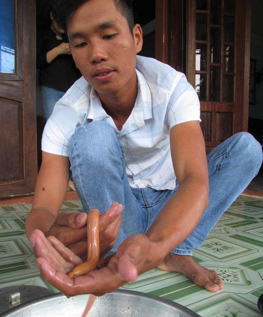 Liên tiếp bắt được lươn vàng óng ở ruộng lúa - 3