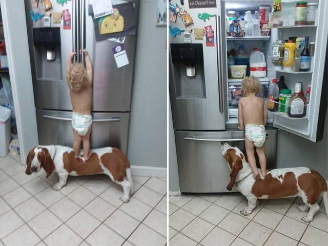 """Clip cậu bé cùng chó cưng """"ăn vụng"""" hút triệu lượt xem"""