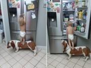 """Bạn trẻ - Cuộc sống - Clip cậu bé cùng chó cưng """"ăn vụng"""" hút triệu lượt xem"""