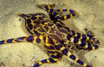 Đi biển, tránh xa những loại hải sản 'sát thủ' này - 1