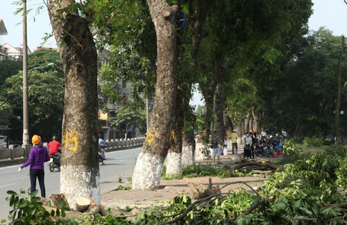 Những tuyến đường HN bị chặt cây xanh: Ngày ấy - Bây giờ - 3