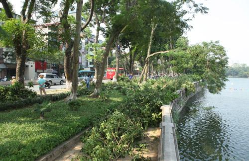 Những tuyến đường HN bị chặt cây xanh: Ngày ấy - Bây giờ - 5
