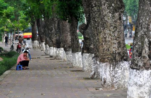 Những tuyến đường HN bị chặt cây xanh: Ngày ấy - Bây giờ - 7