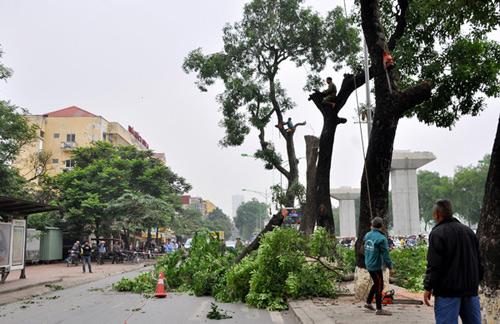 Những tuyến đường HN bị chặt cây xanh: Ngày ấy - Bây giờ - 14