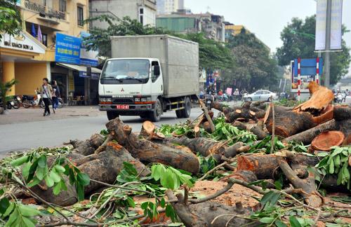 Những tuyến đường HN bị chặt cây xanh: Ngày ấy - Bây giờ - 16
