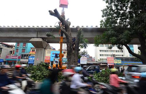 Những tuyến đường HN bị chặt cây xanh: Ngày ấy - Bây giờ - 18