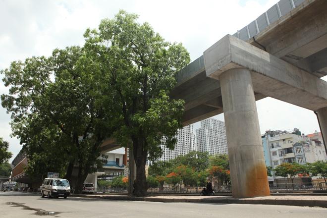 Những tuyến đường HN bị chặt cây xanh: Ngày ấy - Bây giờ - 19