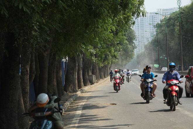 Những tuyến đường HN bị chặt cây xanh: Ngày ấy - Bây giờ - 21