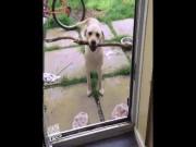 Video Clip Cười - Clip hài: Bó tay với những chú chó... chả ai ngu bằng