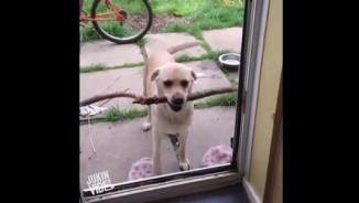 Clip hài: Bó tay với những chú chó... chả ai ngu bằng