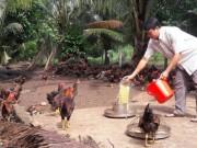 Thị trường - Tiêu dùng - Vay 30 triệu đồng nuôi gà, sau gần 2 năm vốn gốc sinh lời gấp 8 lần