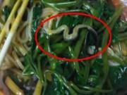 """Phi thường - kỳ quặc - Hoảng hốt khi phát hiện """"sợi mì"""" lạ trong bát là rắn"""
