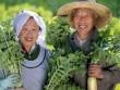 Bật mí phương pháp mới thoát viêm đại tràng của người Nhật