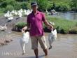 Quảng Nam: Rụng rời chân tay vì cá, vịt bất ngờ lăn ra chết