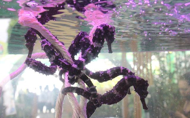 Nhiều loài cá cực dị, giá nghìn đô lần đầu xuất hiện tại triển lãm - 4